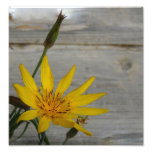 Yellow Star Flower Art Photo