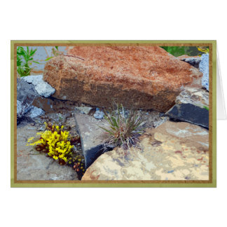Yellow succulent nestled in rocks card