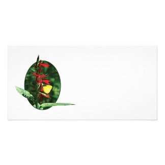 Yellow Sulphur Butterfly on Red Salvia Personalized Photo Card