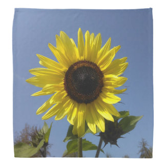 Yellow Sunflower And The Blue Sky Bandana