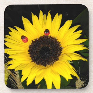 Yellow Sunflower And Two Ladybugs Coaster