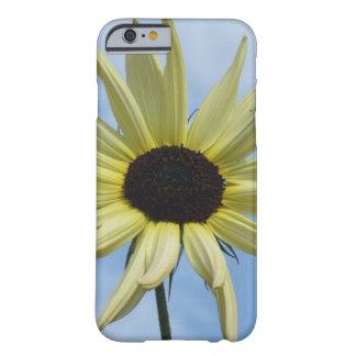 Yellow sunflower barely there iPhone 6 case