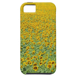 Yellow Sunflower Field iPhone 5 Covers