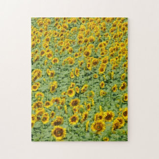 Yellow Sunflower Field Jigsaw Puzzle