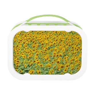 Yellow Sunflower Field Lunch Box
