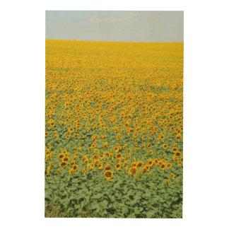 Yellow Sunflower Field Wood Print