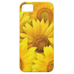 Yellow Sunflower Fields iPhone 5 Cases
