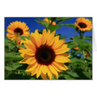 Yellow Sunflower Floral Blank Notecard