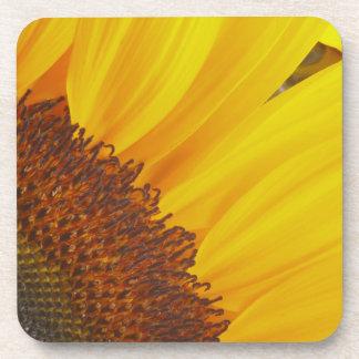 Yellow Sunflower Flower Cork Coaster
