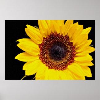 Yellow sunflower  flowers poster