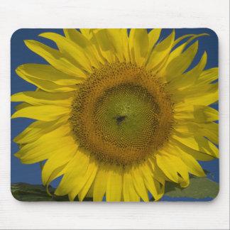 Yellow Sunflower Mouse Mat