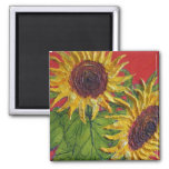 Yellow Sunflowers on Red Square Magnet