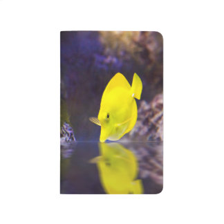 Yellow Surgeon fish looks at it's reflection Journals