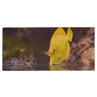 Yellow Surgeon fish looks at it's reflection Wood USB 2.0 Flash Drive