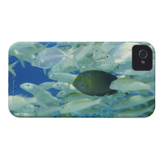 Yellow surgeon fish with yellow stripe goldfish Case-Mate iPhone 4 case