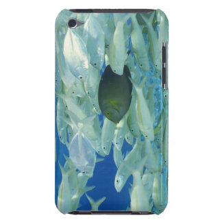 Yellow surgeon fish with yellow stripe goldfish iPod touch Case-Mate case