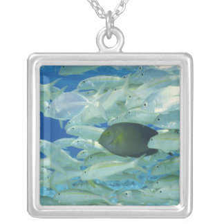 Yellow surgeon fish with yellow stripe goldfish silver plated necklace