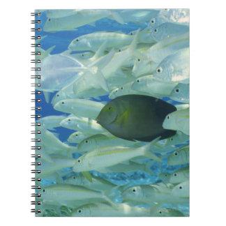 Yellow surgeon fish with yellow stripe goldfish spiral notebook
