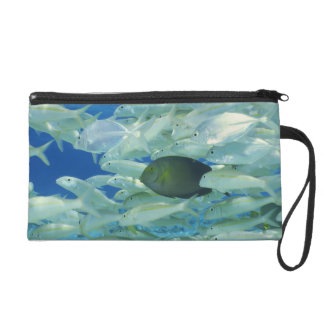 Yellow surgeon fish with yellow stripe goldfish wristlet