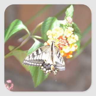 Yellow Swallowtail Butterfly Square Sticker