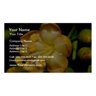 yellow Teak (Tectona grandis) flowers Pack Of Standard Business Cards
