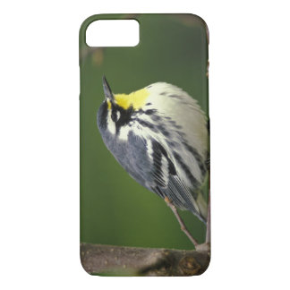 Yellow-throated Warbler (Dendroica dominica) iPhone 8/7 Case