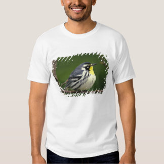 Yellow-throated Warbler (Dendroica dominica) Shirt