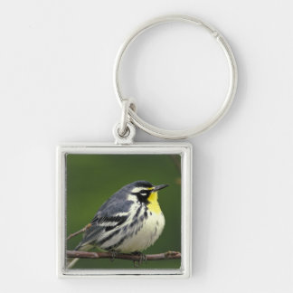 Yellow-throated Warbler (Dendroica dominica) Silver-Colored Square Key Ring