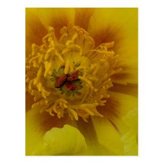 Yellow Tree Peony Postcard