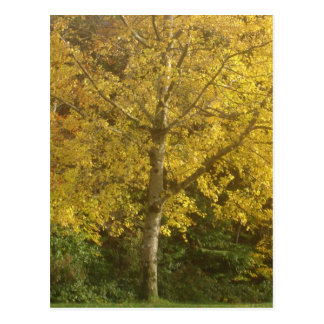 Yellow tree postcard