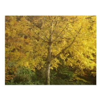 Yellow tree postcard