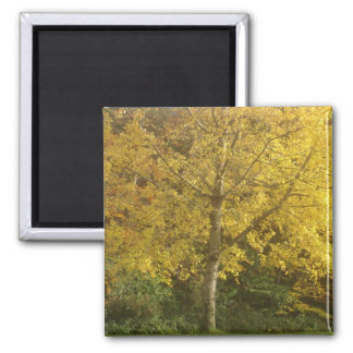 Yellow tree square magnet