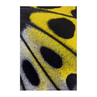 Yellow tropical butterfly close-up acrylic print