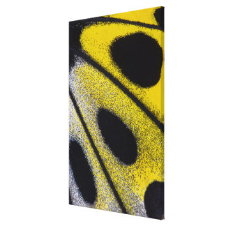 Yellow tropical butterfly close-up canvas print