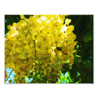Yellow Tropical Flowers Poster Photograph