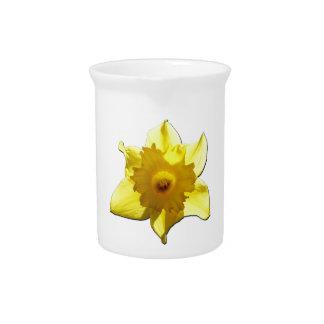 Yellow Trumpet Daffodil 1.2 Pitcher