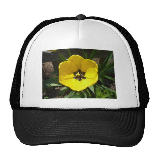 Yellow Tulip Photograph Cap