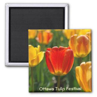 Yellow Tulips, Orange Tulips Square Magnet