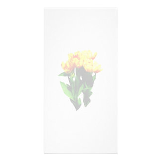 Yellow Tulips With Red Stripes Customized Photo Card