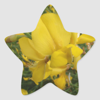 Yellow Vetchling Star Stickers