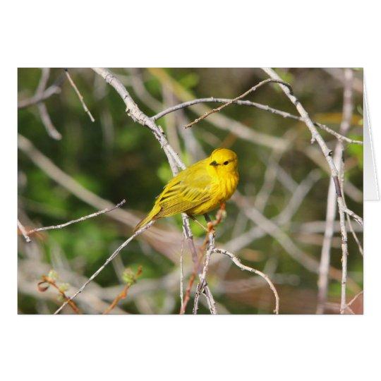 Yellow Warbler 2 Card