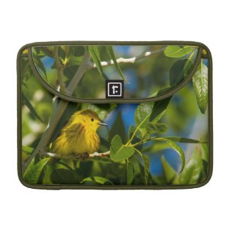 Yellow Warbler In Tree Near Augusta, Montana Sleeve For MacBooks