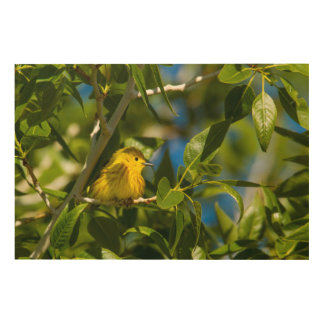 Yellow Warbler In Tree Near Augusta, Montana Wood Wall Decor