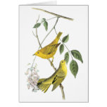 Yellow Warbler, John Audubon Card