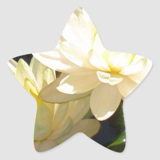 yellow waterlilies star stickers