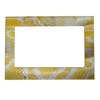 YELLOW WHITE BOA SNAKE SKIN TEXTURES REPTILES PATT MAGNETIC PICTURE FRAME