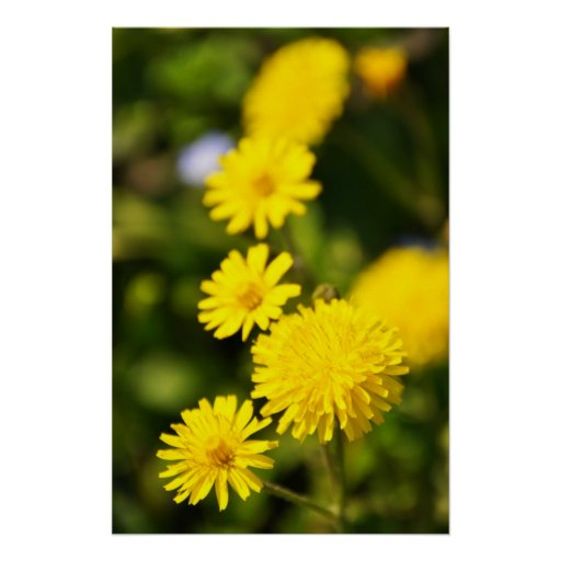 Yellow Wild Flower Photo Poster
