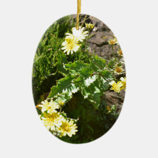 Yellow Wild Flower - Tolpis Azorica Christmas Ornament