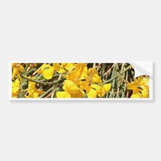 Yellow wildflowers in bloom, Utah, USA Bumper Sticker