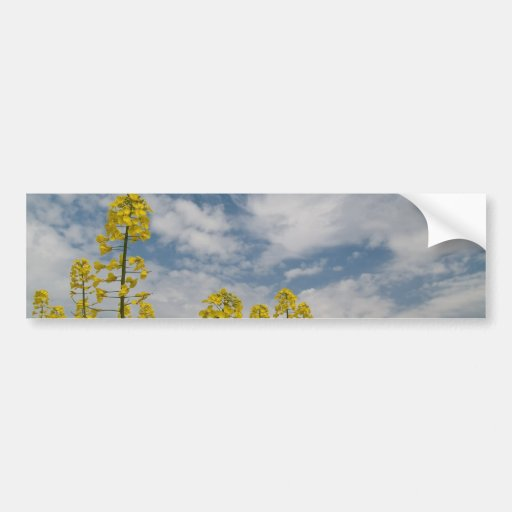Yellow Wildflowers in the Sky Bumper Stickers